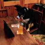 Dog at Pub